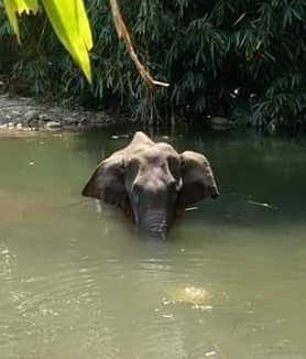 elephant died in Kerala